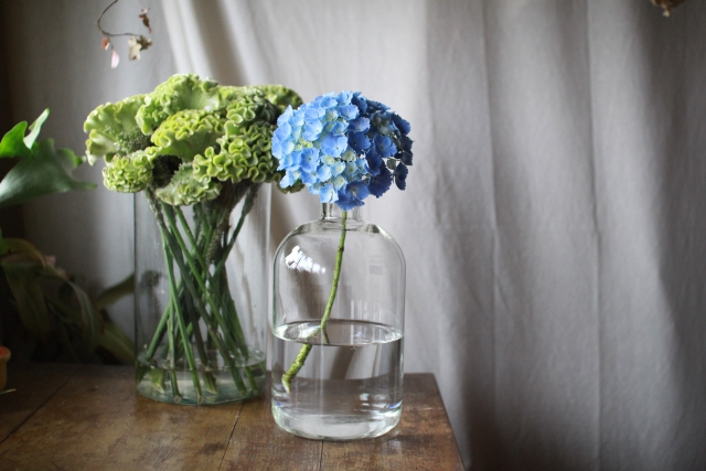 ~花のある暮らし~初夏を彩る『アジサイ』を楽しむおうち時間