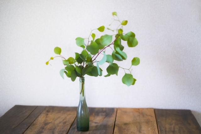 灰色の花瓶に生けられたユーカリ・ポポラス